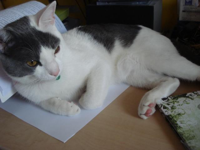 Pet's photos Dsc00820