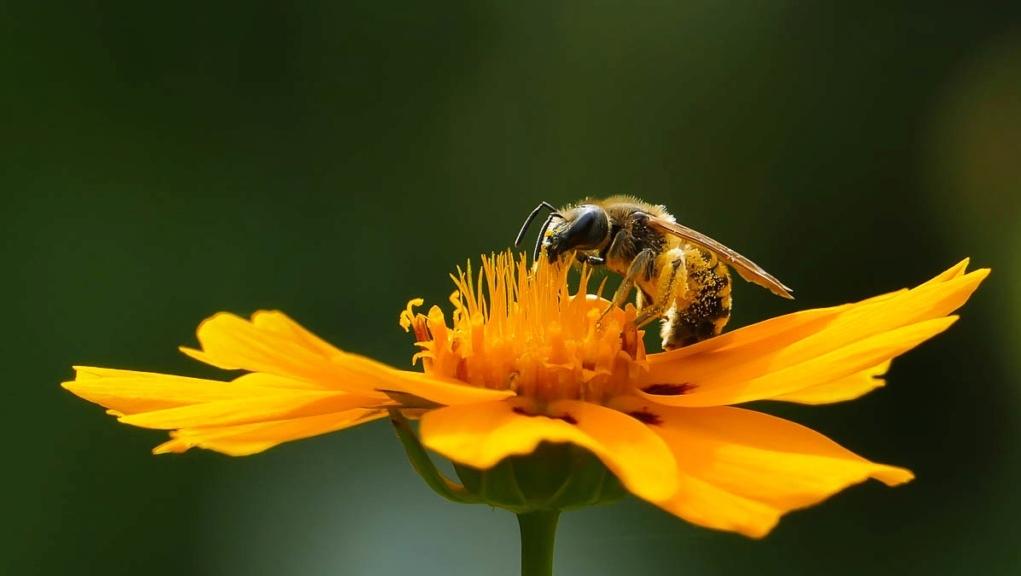 Récolte du pollen  05072010