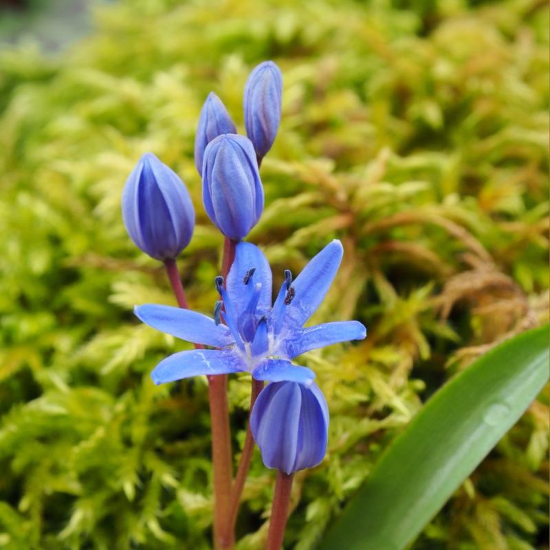 L'étoile bleue P3030014