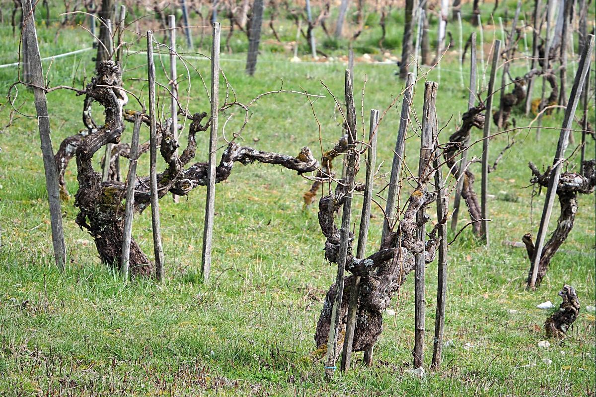 La revendication des vieilles vignes P3071810