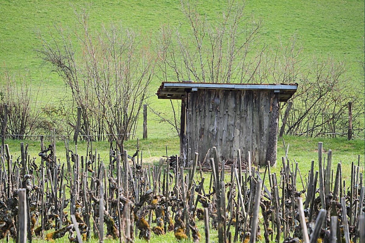 La revendication des vieilles vignes P3071811