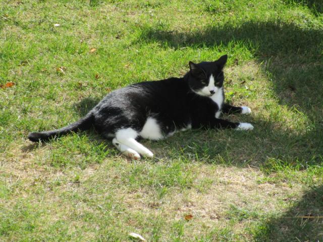 HUNA, chatte européenne Noire&blanche, née en 2012 Img_1412
