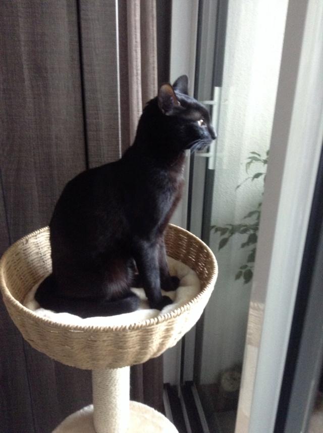 ORIZON, chaton noir, est né le 11 juin 2018 Img_3410