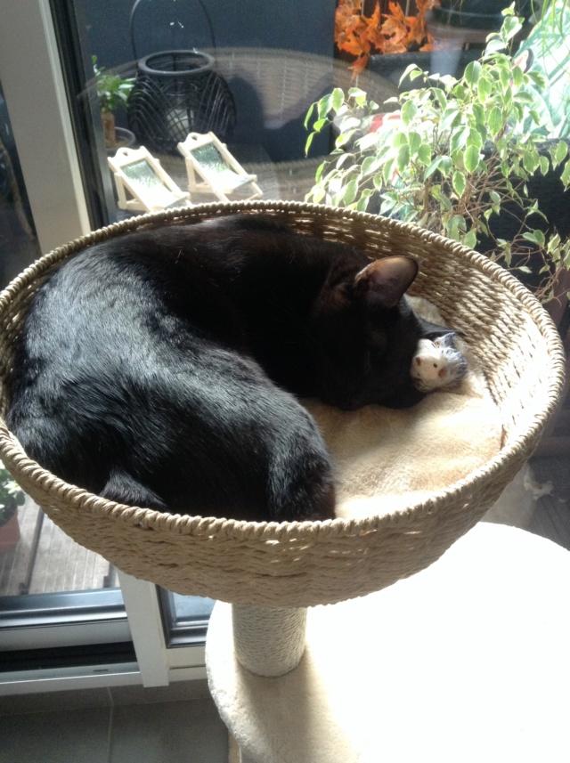 ORIZON, chaton noir, est né le 11 juin 2018 Img_3411