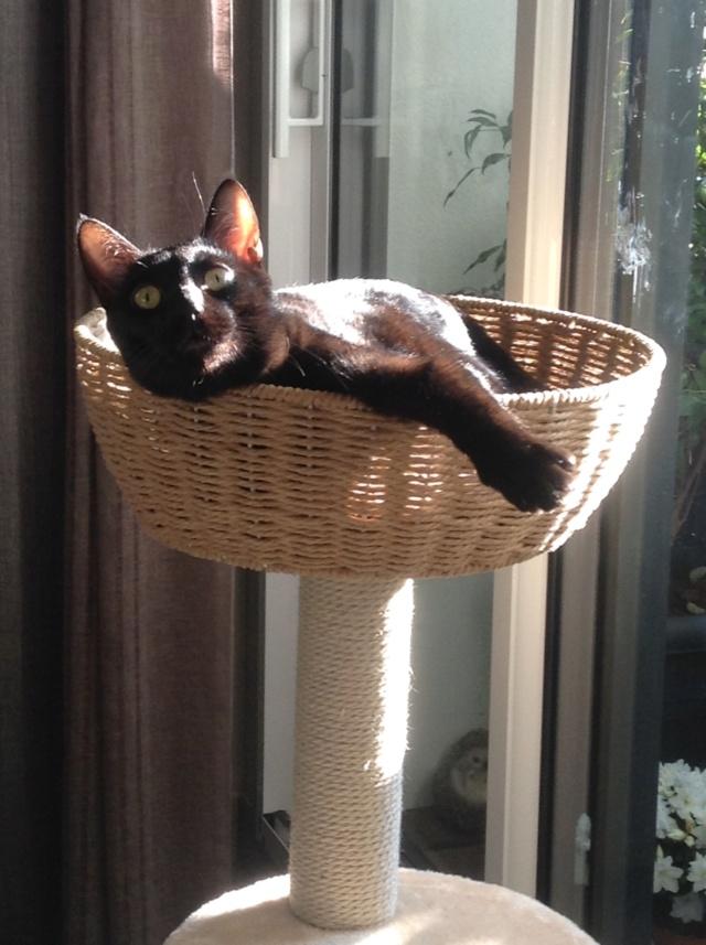 ORIZON, chaton noir, est né le 11 juin 2018 Img_3412