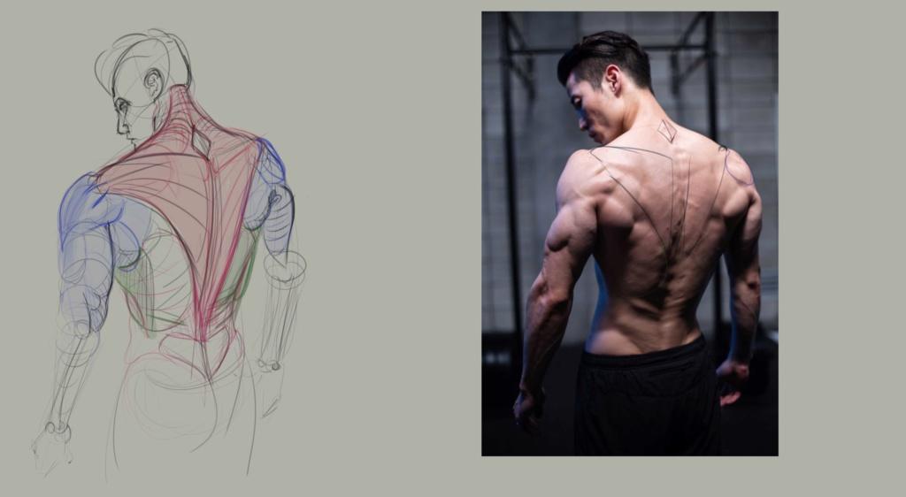 Sketchbook Gengis - Page 7 Anatom11