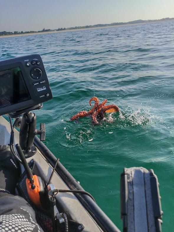 Sorties kayak Finistère Sud, Vacances 2021 Img_2103