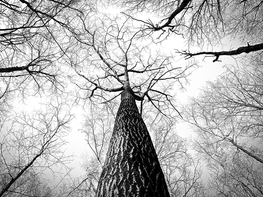 The Tree  Black-10
