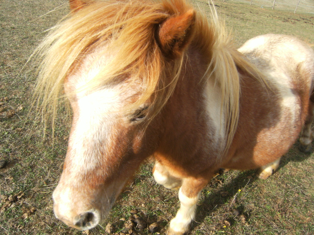 ( Dépt 24) Jerry poney ONC né en 2011, contact Pascale76 Dscf5910