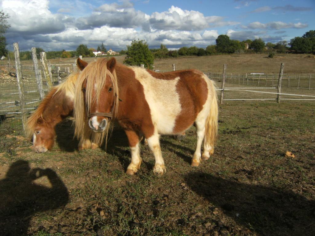 ( Dépt 24)Tanja poney ONC né en 2011, contact Pascale76  Dscf6012