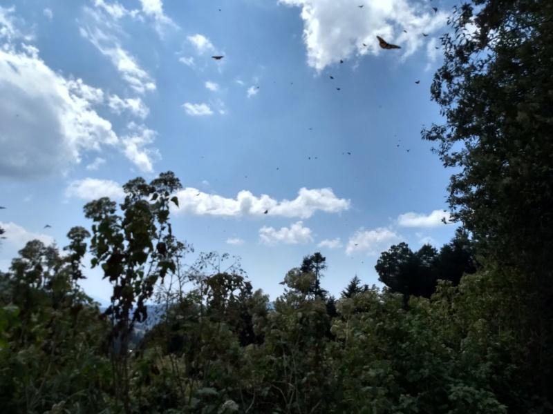 Monarch Butterfly Sanctuary But410