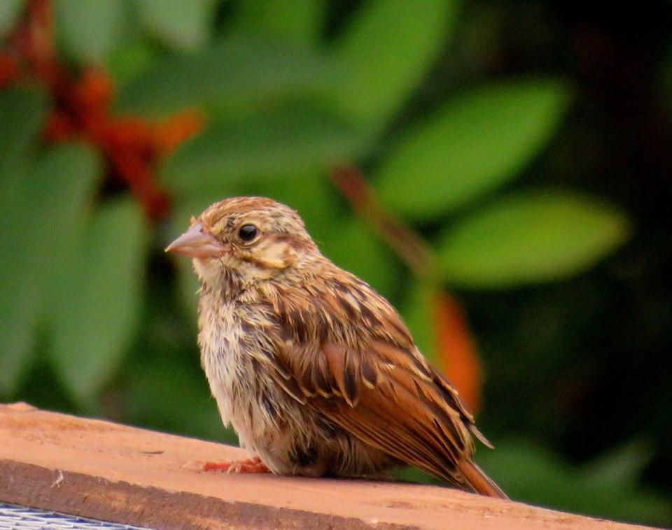 Aide pour identifier cet oiseau 39941010