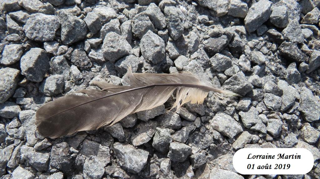 Oiseau de proie et sa capture Img_0627