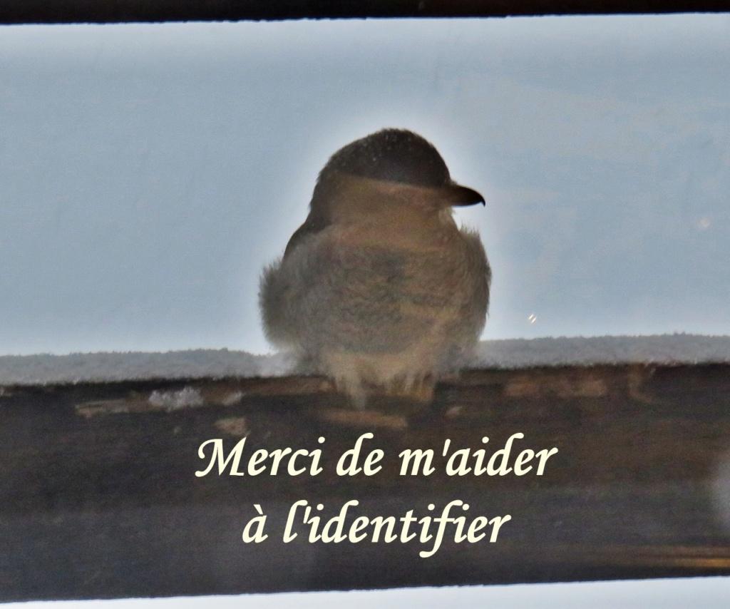 Oiseau de proie ??? Img_4811