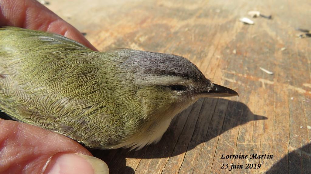 Oiseau mort aide identification Merci  Img_6014