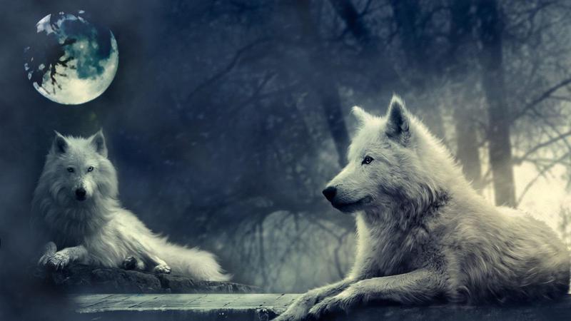 L'Esprit des Loups