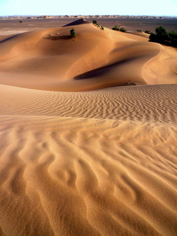 Maroc, images du Sahara P1000510