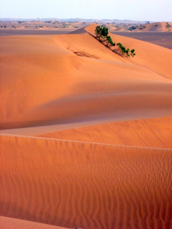 Maroc, images du Sahara P1000512