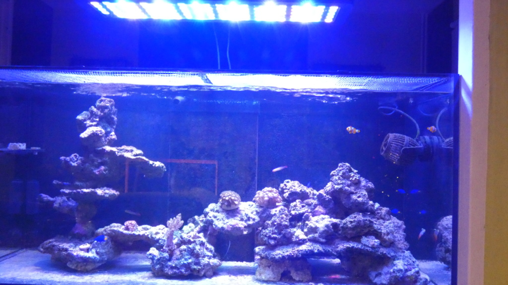 Présentation de mon Reefer 350 V3 P1000410
