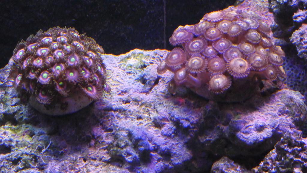 Présentation de mon Reefer 350 V3 P1000413