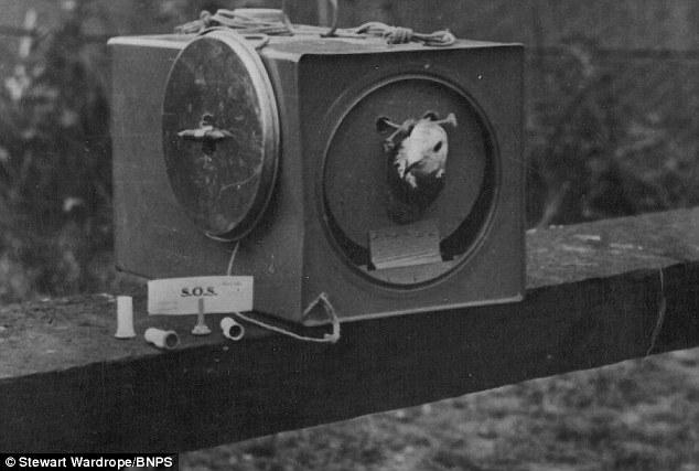 Pigeons dans la RAF Articl10