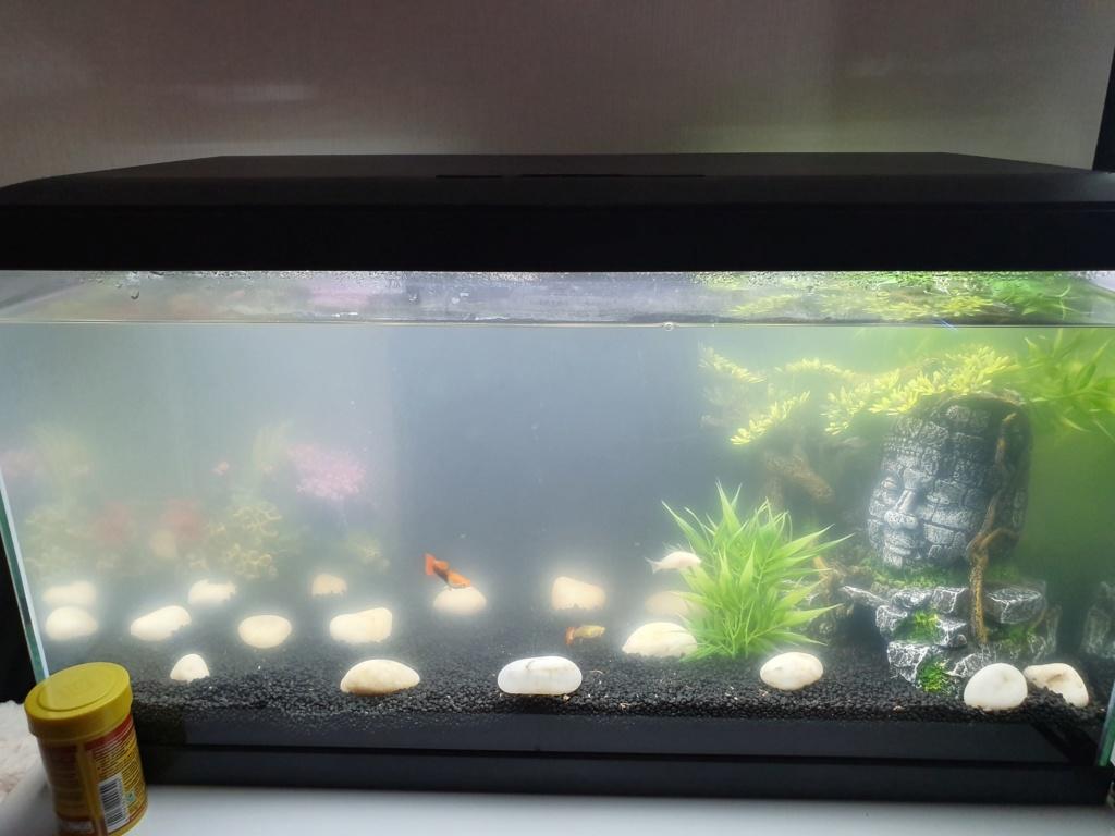 [Help - Debutant] Aquarium 48L, population & autres 20190511