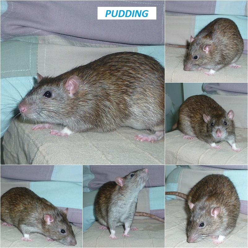 [Propose] PUDDING pour mai 2019 Puddin10