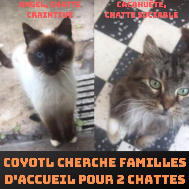 Coyotl :  deux minettes et leur suite à l'adoption Cherch10
