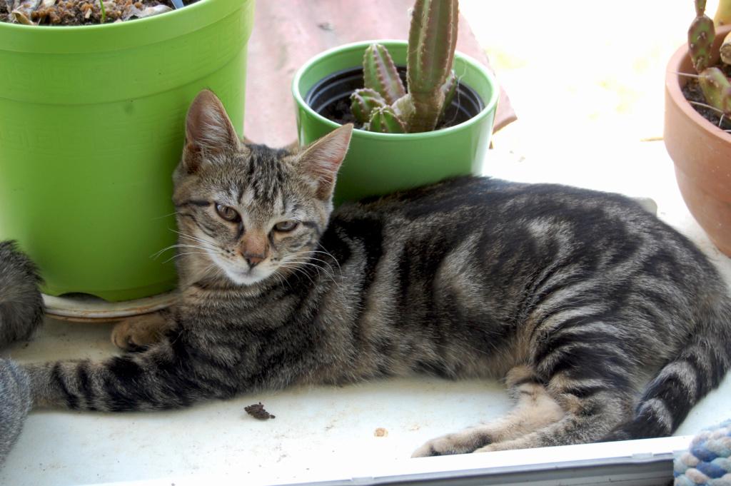 Nalin, chatonne à adopter Dsc_0022