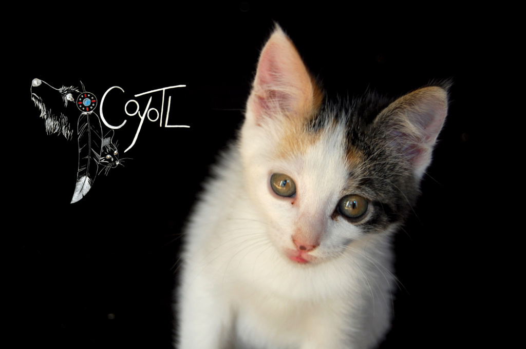 Coyotl, association prônant une approche bienveillante de l'animal :) Entzot10