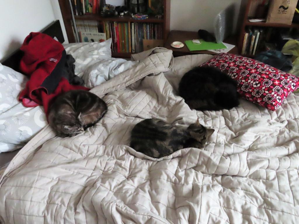 Nalin, chatonne à adopter Img_0910