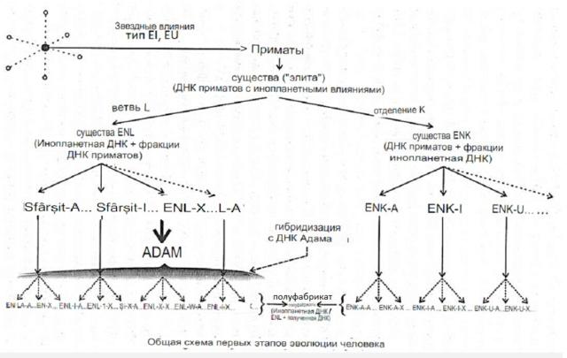 Раду Синамар - перевод книги «Забытый генезис» 3512
