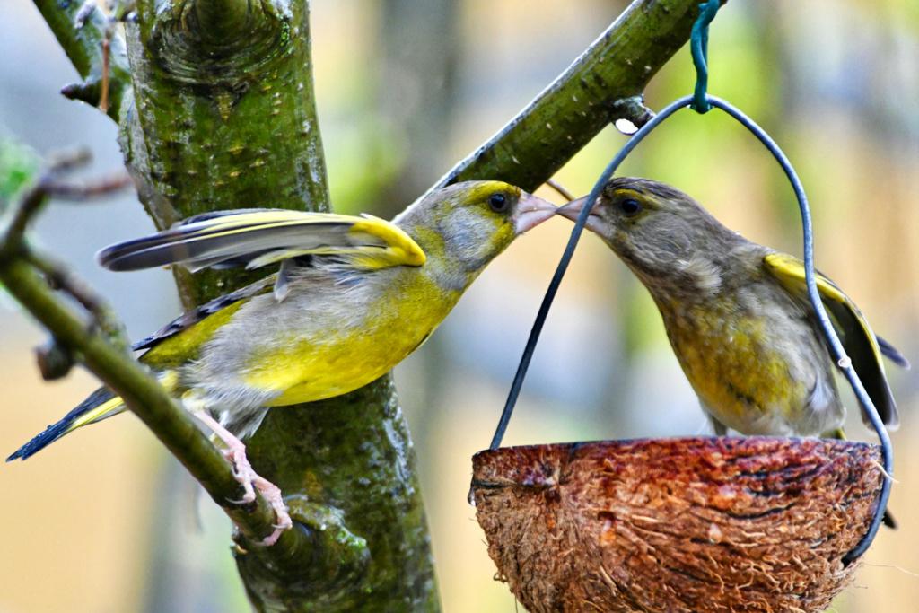 des oiseaux amoureux Dsc_0114