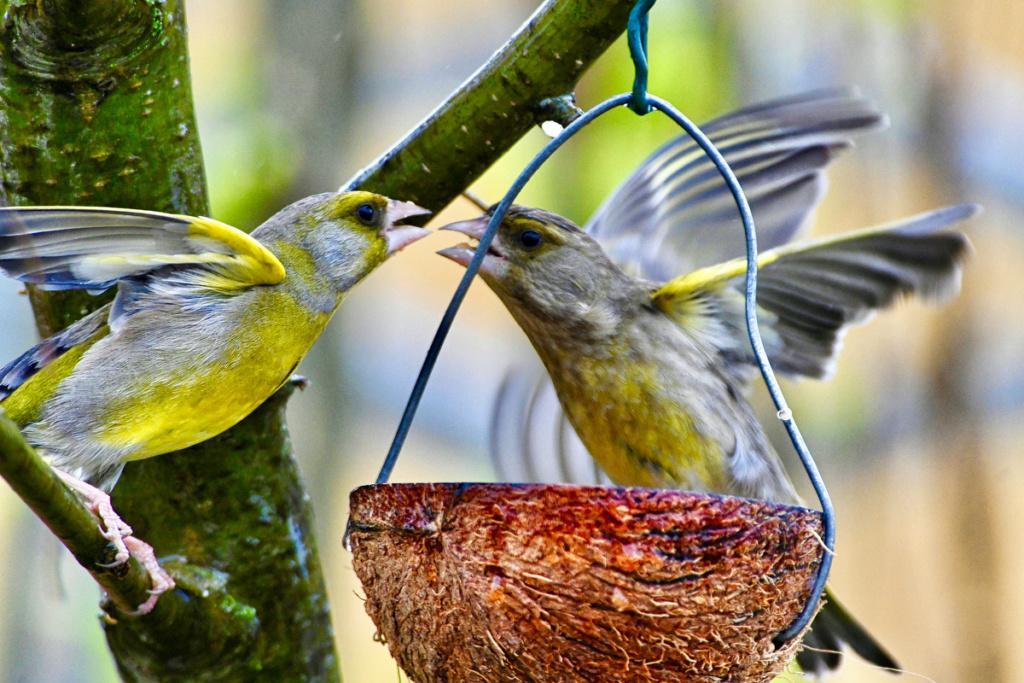des oiseaux amoureux Dsc_0115