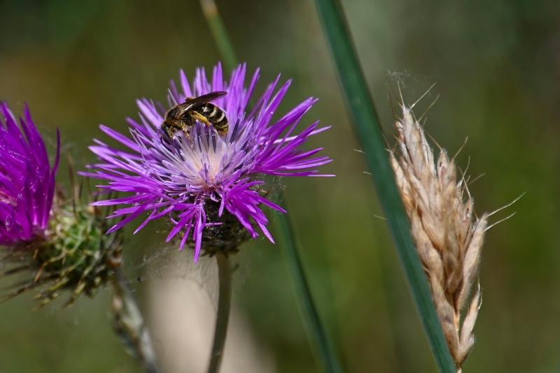 fleurs et insectes Dsc_4117