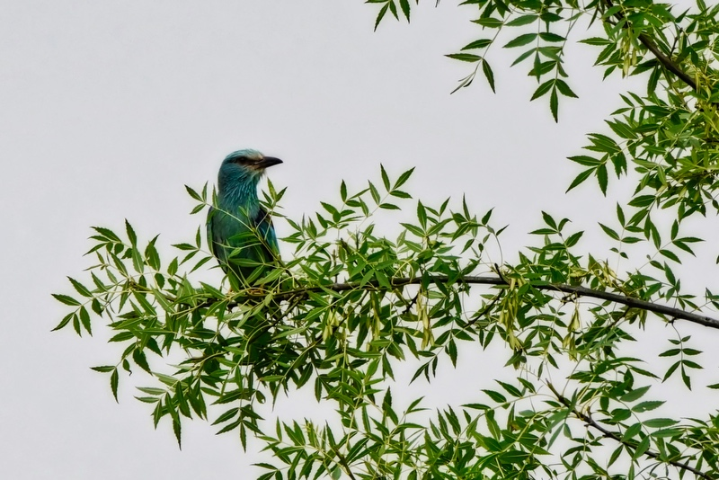 nouveaux oiseaux du jour Dsc_5712
