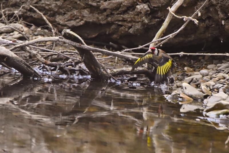 nouveaux oiseaux du jour Dsc_5713