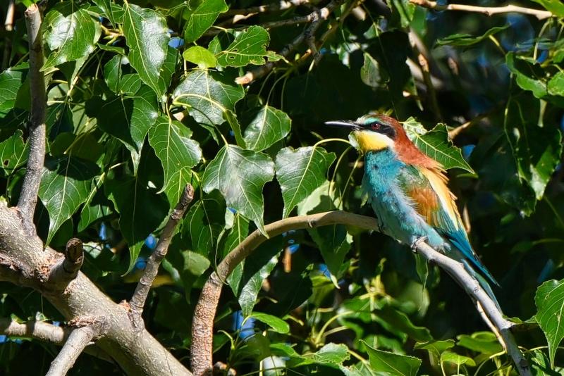 oiseaux hier matin Dsc_6011