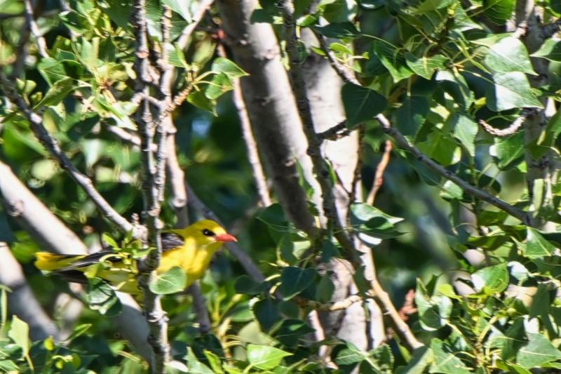 oiseaux et encore Dsc_6711