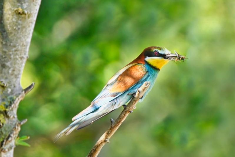 oiseaux et encore Dsc_6713