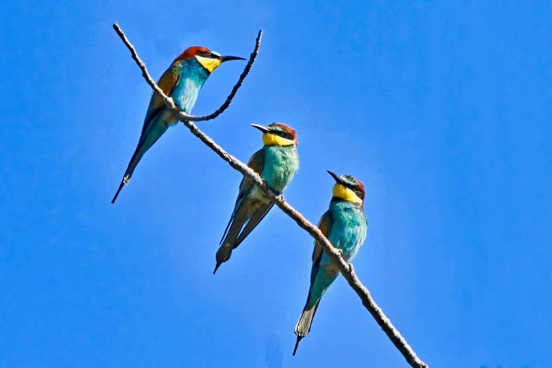 suite des oiseaux Dsc_7111