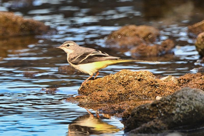 d'autres oiseaux Dsc_7716