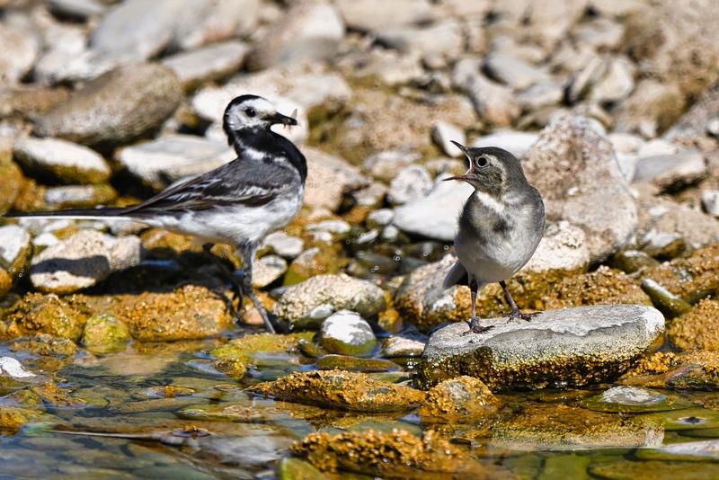 d'autres oiseaux Dsc_8610