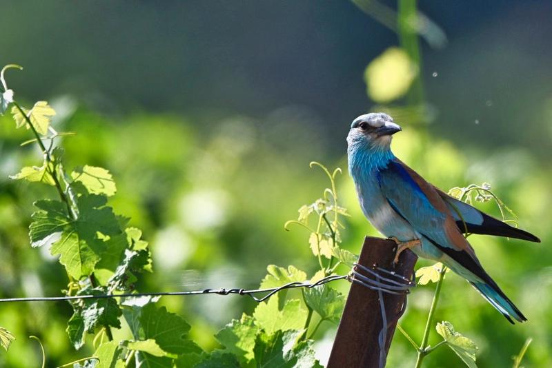 d'autres oiseaux Dsc_8714