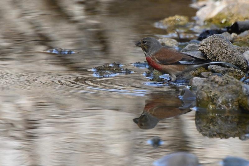 de nouveaux oiseaux  Dsc_9210
