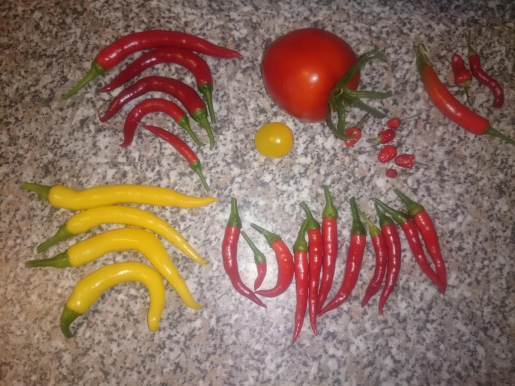 Unser erstes Gemüsebeet - Seite 19 Dsc_0324