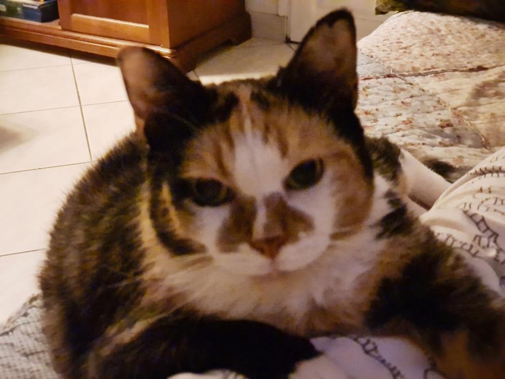Des nouvelles de Chica ( Pets Chica ) 20200812