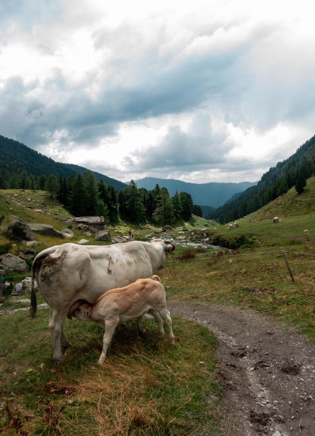 Pâturage et montagne  Lrm_ex10