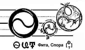 Описание Буков - Страница 2 7710