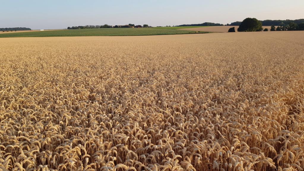 Suivis blés 2019 - Page 16 20190723